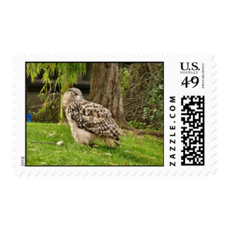 Great Horned Owl Stamps