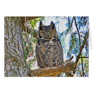 Great Horned Owl Staring Card