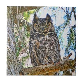 Great Horned Owl Staring Ceramic Tiles