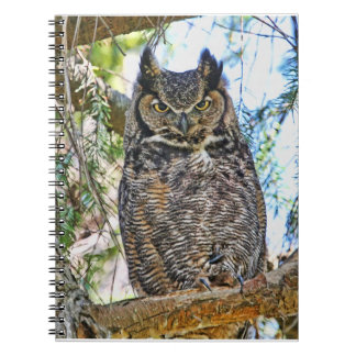 Great Horned Owl Staring Note Book