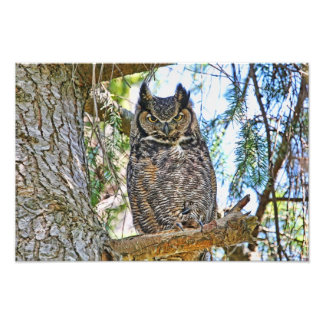 Great Horned Owl Staring Photo Print