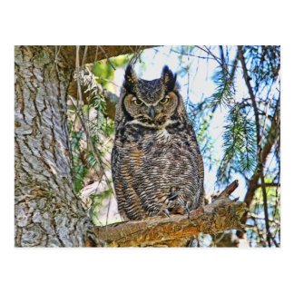 Great Horned Owl Staring Postcard