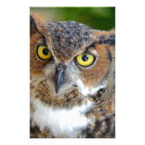 Great Horned Owl Stationery