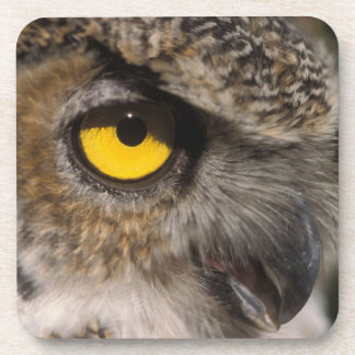 great horned owl, Stix varia, Alaska Zoo, Drink Coaster