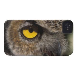 great horned owl, Stix varia, Alaska Zoo, iPhone 4 Case