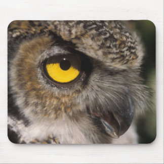 great horned owl, Stix varia, Alaska Zoo, Mouse Pad