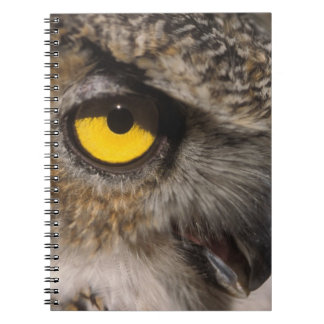 great horned owl, Stix varia, Alaska Zoo, Notebook