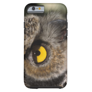 great horned owl, Stix varia, Alaska Zoo, Tough iPhone 6 Case