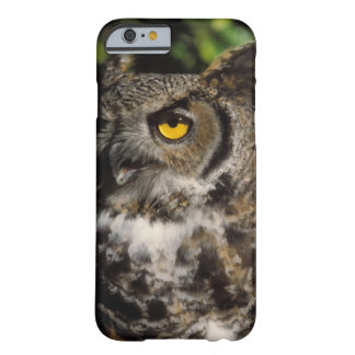 great horned owl, Stix varia, in the Anchorage Barely There iPhone 6 Case