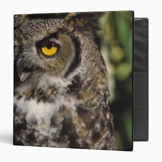 great horned owl, Stix varia, in the Anchorage Vinyl Binder