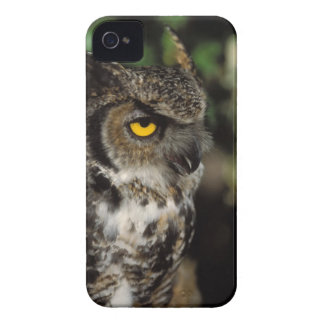 great horned owl, Stix varia, in the Anchorage iPhone 4 Cases