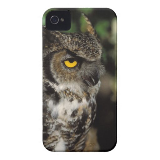 great horned owl, Stix varia, in the Anchorage Blackberry Case
