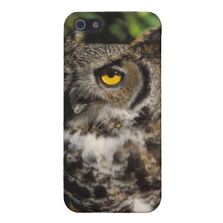 great horned owl, Stix varia, in the Anchorage Case For iPhone SE/5/5s