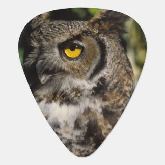 great horned owl, Stix varia, in the Anchorage Guitar Pick