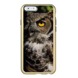 great horned owl, Stix varia, in the Anchorage Incipio Feather Shine iPhone 6 Case