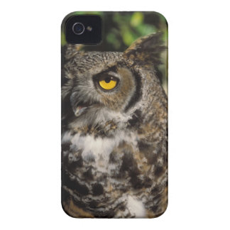 great horned owl, Stix varia, in the Anchorage iPhone 4 Case-Mate Case