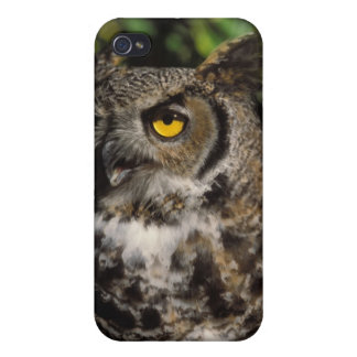 great horned owl, Stix varia, in the Anchorage iPhone 4 Covers