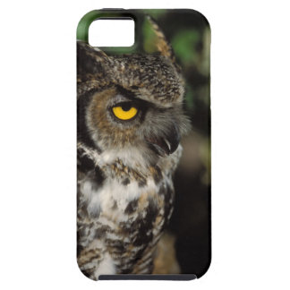 great horned owl, Stix varia, in the Anchorage iPhone SE/5/5s Case