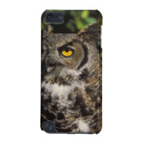 great horned owl, Stix varia, in the Anchorage iPod Touch 5G Cover