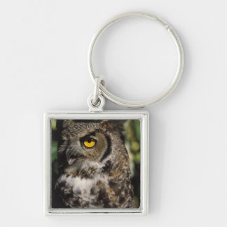 great horned owl, Stix varia, in the Anchorage Key Chain