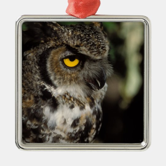 great horned owl, Stix varia, in the Anchorage Metal Ornament