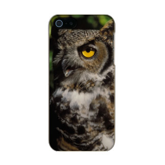 great horned owl, Stix varia, in the Anchorage Metallic Phone Case For iPhone SE/5/5s
