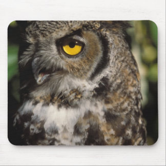 great horned owl, Stix varia, in the Anchorage Mouse Pad
