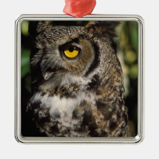great horned owl, Stix varia, in the Anchorage Square Metal Christmas Ornament