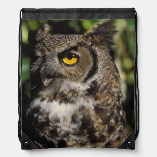 great horned owl, Stix varia, in the Anchorage Backpacks