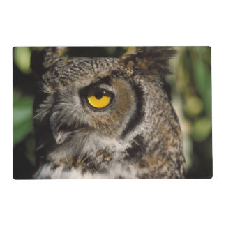 great horned owl, Stix varia, in the Anchorage Placemat