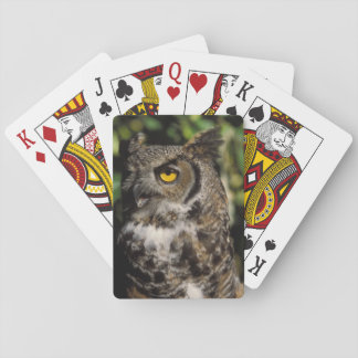 great horned owl, Stix varia, in the Anchorage Playing Cards