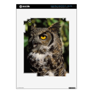 great horned owl, Stix varia, in the Anchorage Decal For iPad 3
