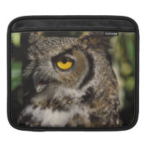 great horned owl, Stix varia, in the Anchorage Sleeve For iPads