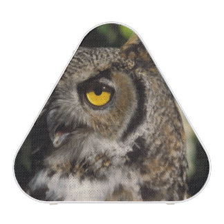 great horned owl, Stix varia, in the Anchorage Speaker
