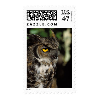 great horned owl, Stix varia, in the Anchorage Stamp