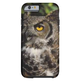 great horned owl, Stix varia, in the Anchorage Tough iPhone 6 Case