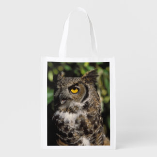 great horned owl, Stix varia, in the Anchorage Market Tote