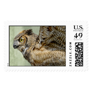 Great Horned Owl Take Off Postage
