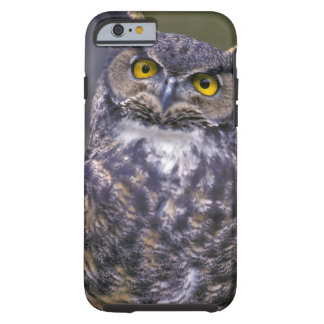Great Horned Owl Tough iPhone 6 Case