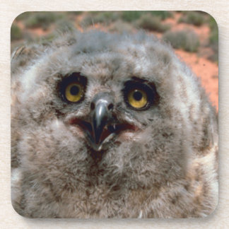Great Horned Owlet Coaster