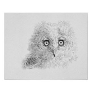 Great Horned Owlet Drawing Poster