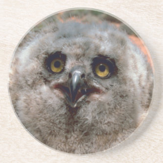 Great Horned Owlet Drink Coaster