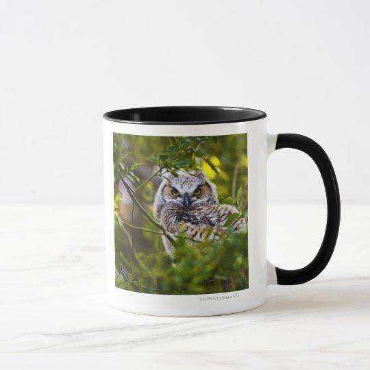 Great Horned Owlet Mug