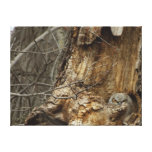Great Horned Owlet - Wildlife Photography Canvas Print