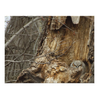Great Horned Owlet - Wildlife Photography Photo Print