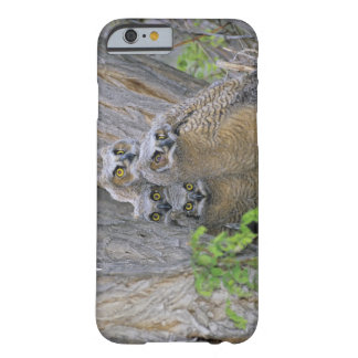 Great Horned Owlets (Bubo virginianus) nest in a Barely There iPhone 6 Case