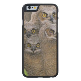 Great Horned Owlets (Bubo virginianus) nest in a Carved Maple iPhone 6 Slim Case