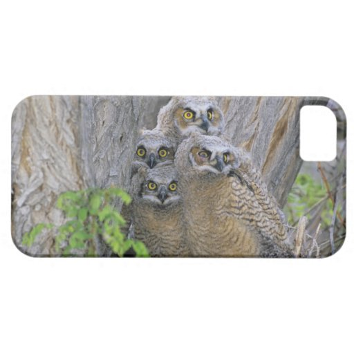 Great Horned Owlets (Bubo virginianus) nest in a iPhone 5 Case