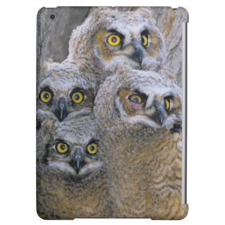 Great Horned Owlets (Bubo virginianus) nest in a Case For iPad Air