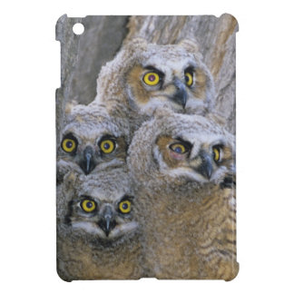 Great Horned Owlets (Bubo virginianus) nest in a Case For The iPad Mini